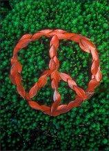 Peace sign, leaves, autumn