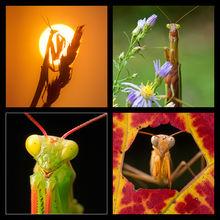 Praying Mantis Coaster Set