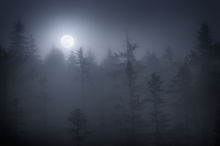 acadia national park, Maine, Schoodic Peninsula, fog, moon, dark, bog,