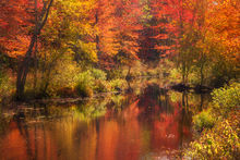 autumn, reflection, red, tully lake, royalston, Massachusetts, patrick zephyr, stream,