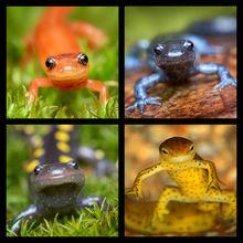 Salamanders Coaster Set