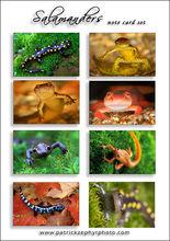 Salamanders Set