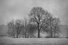 Hadley, Massachusetts, snow, storm, trees