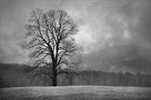 Snow, trees, Hadley, Massachusetts fog