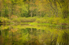 reflection, spring, pond, pelham, massachusetts, green
