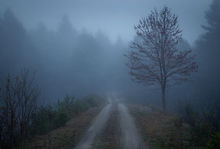 fog, spring, New Salem, Massachusetts, Quabbin Reservoir, Patrick Zephyr, trail, country road
