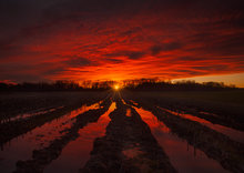 sunset, red, dusk, Hadley, Massachusetts, corn field,