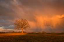 tree, hadley, sunset, storm, golden light, massachusetts, Patrick Zephyr
