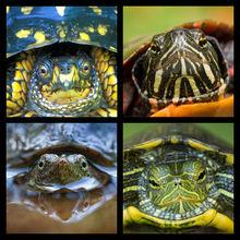Turtles Coaster Set