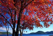 Quabbin reservoir, Massachusetts, autumn, red maple,