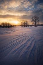 tree, winter, dawn, snow, sunrise, hadley, massachusetts,