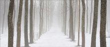 Winter, fog, Amherst, Massachusetts, trees