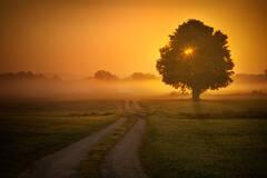 tree, sunrise, fog, Hadley, Massachusetts, Patrick Zephyr, path,