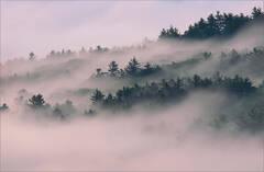 Climbing Fog