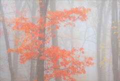 Color in the Fog