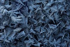 Dancing Frost