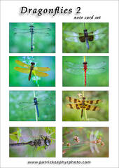 Dragonfly 2 Set