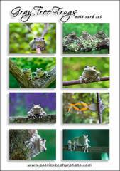 Gray Treefrogs Set