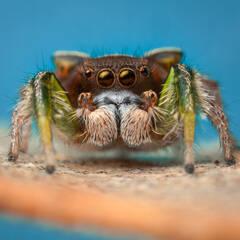 Paradise Spider Puzzles