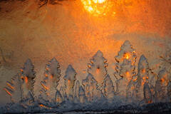 ice,sunrise, trees, dawn, Massachusetts, Patrick Zephyr