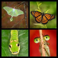 Amazing Insects Coaster Set