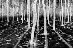 Inverse Forest