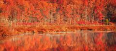 Late Autumn Rust