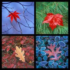 Leaves 2 Coaster Set