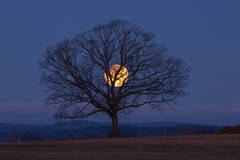lunar eclipse, 2018, Hadley, Massachusetts, tree, patrick zephyr, nature photography,
