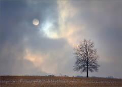 Moon Imitation
