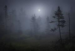 acadia national park, Maine, Schoodic Peninsula, fog, moon, dark, bog,