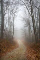 November Fog