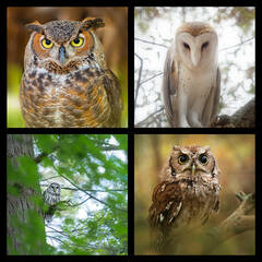 Owls Coaster Set