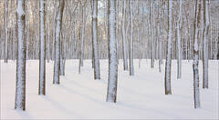Painted Winter