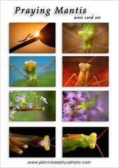Praying Mantis Set