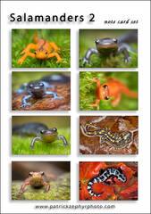 Salamanders 2 Set