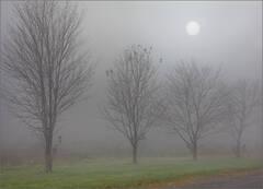 Burning Through the Fog