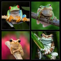 Treefrogs Coaster Set