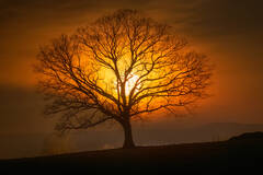 moonset, tree, moon, hadley, massachusetts, patrick zephyr