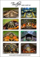 Turtles Set