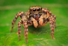 Unknown Jumping Spider
