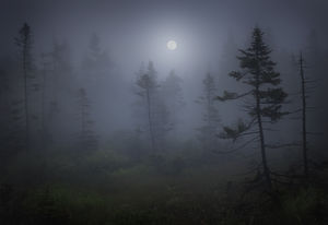 Moonrise in a Bog,