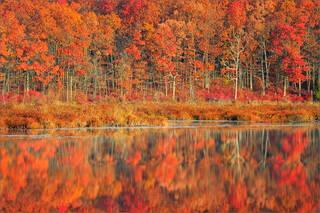 Late Autumn Light