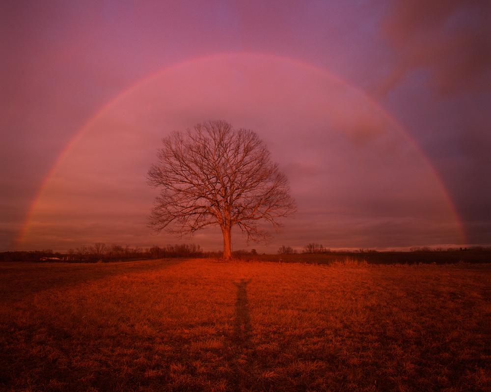 rainbow, tree, sunset, evening, Hadley, Patrick Zephyr, Massachusetts, nature Photography, landscape photography, red, shadow, photo