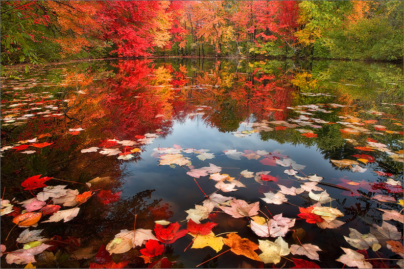 Autumn Foliage, slideshow, photo
