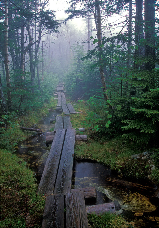 The Long Trail : Vermont : Patrick Zephyr Photography