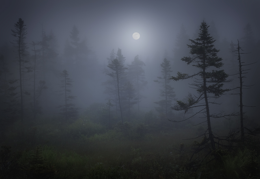 acadia national park, Maine, Schoodic Peninsula, fog, moon, dark, bog, , photo
