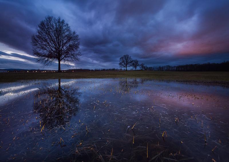tree, reflection, ice, winter, night, dark, dusk,