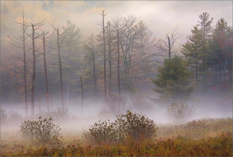 fog, autumn, trees, massachusetts