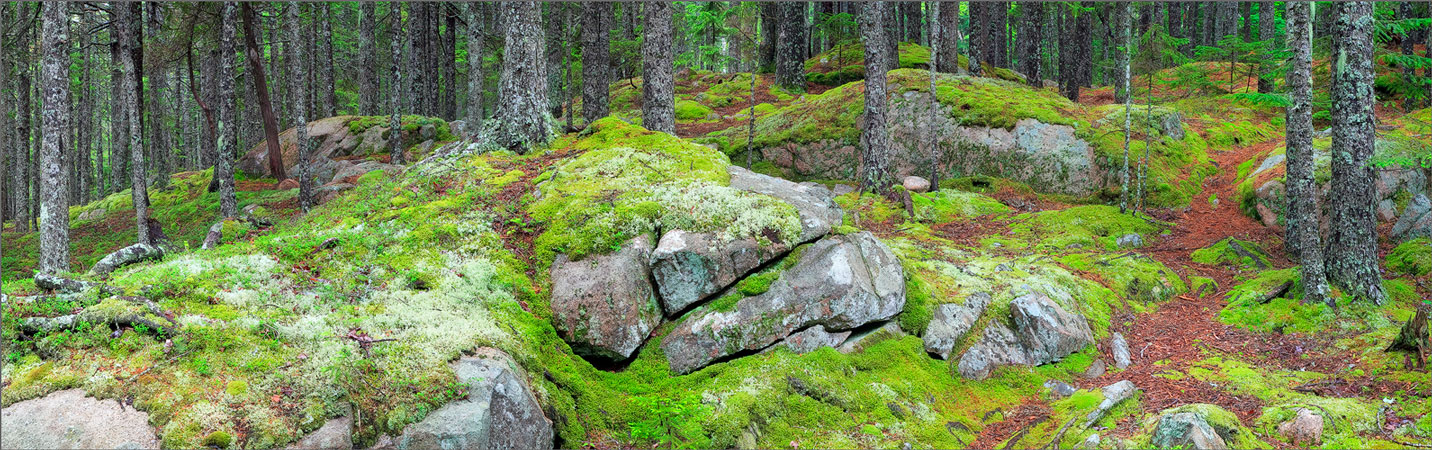 Acadia national park, Maine, forest, moss, photo